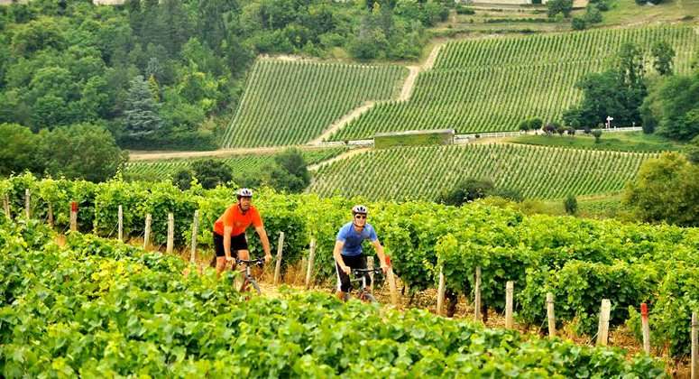 biking-burgundy-hills775